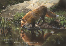Latham,Rebecca-Beside Still Waters - Red Fox