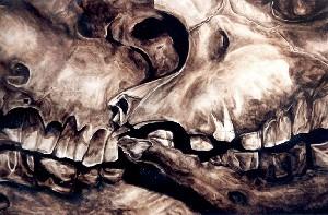 Rhino Skulls - Chitwan National Park