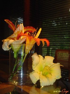 Lillies in Glass