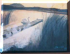 Cygne au pays des brumes - Swan in the wistland