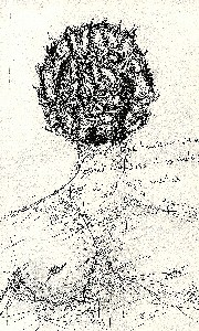 Liu,Ama-Man with many noses