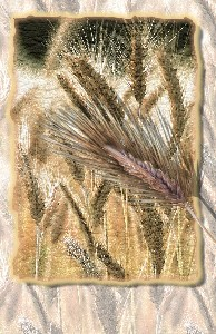 Rivero,Michael-Wheat
