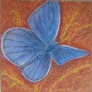 Velka,Stella-Blue butterfly
