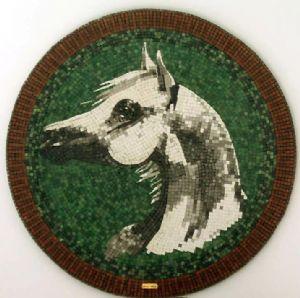 ashkanani,mahmoud-Arabian Horse