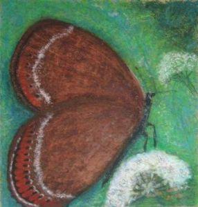 Broun butterfly