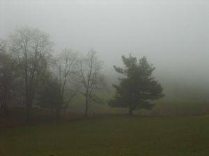 Arbres et brouillard