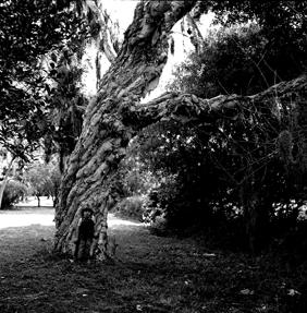 Ryan's Tree