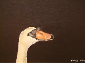 Swan At Nightfall
