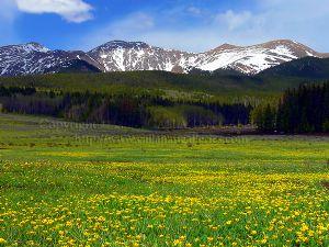 Golden Mountain Meadow