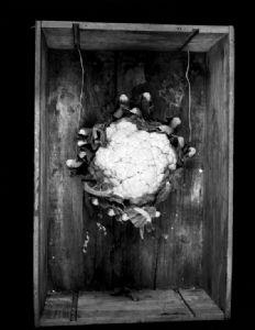 van Oorschot,Martijn-cauliflower