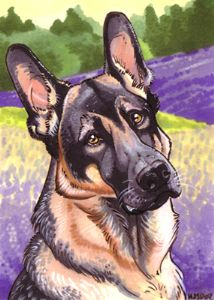 Davis,Hannah JS-German Shepherd