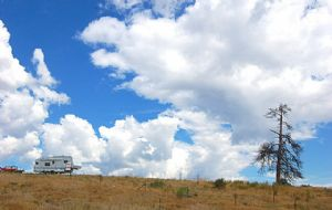 Ford, Camper, Tree