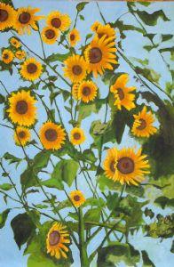 Wild Kansas Sunflowers