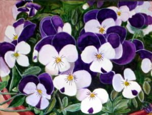 Pansies looking to the sun