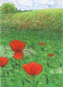Poppy in garden 2