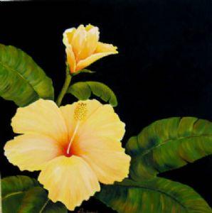 Hawaiian Hibiscus