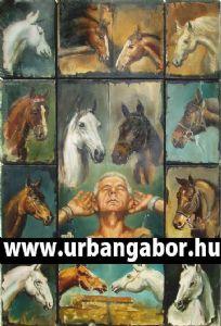 Horses portraits