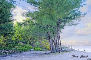 Jewusiak,Thomas-Beach Woods
