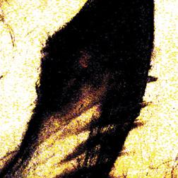 Nedelkoski,Sinisa-Red Eye