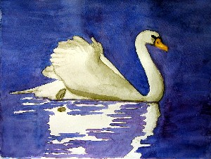 Elliott,Bernie-Mute Swan