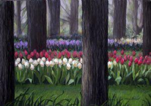 Amsterdam's Tulips