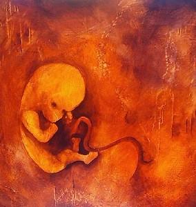 fetal mater