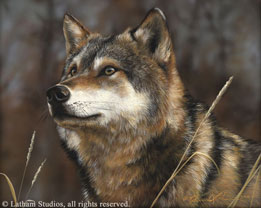Fixation - Wolf