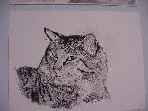 Illustrated Fluffy