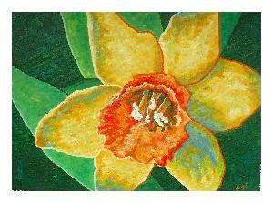 Bowler,Jacki-Daffodil 2
