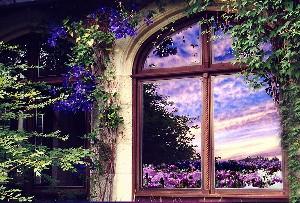 GARDEN IN THE WINDOW-BEAUTIFUL PHOTOGRAPH