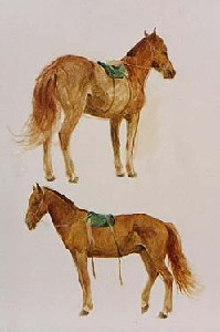 HORSERACE FOR NADAMU