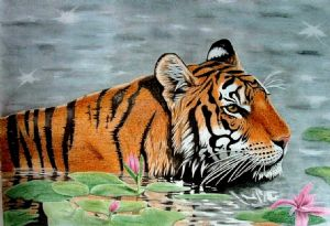 Drawn Tiger in Water