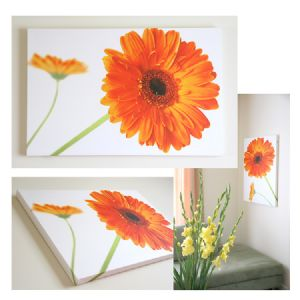 Two Orange Gerberas Daisy Flower