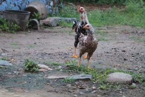 Pachiannnan,Deepak-Farm