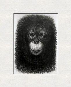 Orangutang baby-portrait