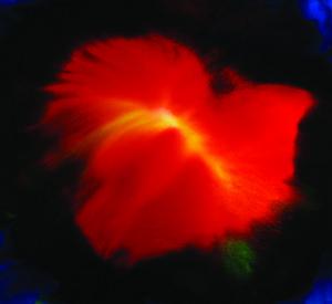 liquid flower