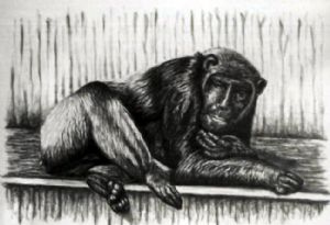Chimpanzee with selfportrait