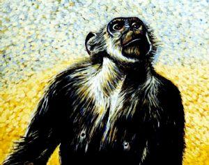 Chimpanzee portrait (3)