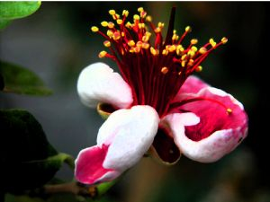 Flower #4