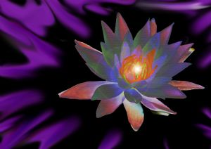 Purple Waterlily of Life