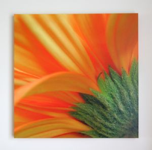 Orange Gerbera Daisy Flower Petals