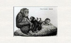 Chimpanzee with baby and selfportrait