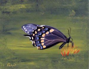C est un Papillon