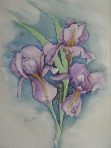 price,ray-Iris