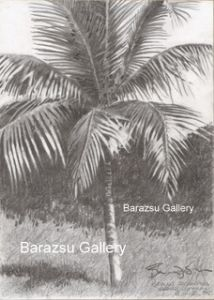 Barazsu,Dave-Palm Tree Grand Cayman
