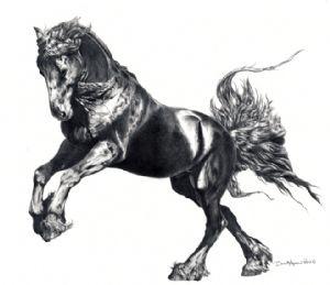 Keegan Jewel, Friesian Stallion