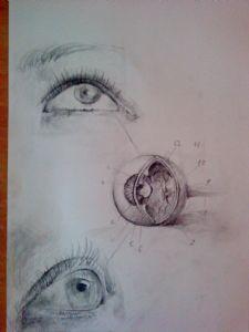 Nikolis,Nikos-Eye Study
