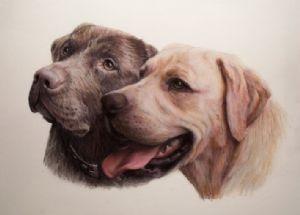 Sommer's Labradors