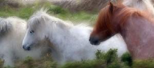 Pony Trail