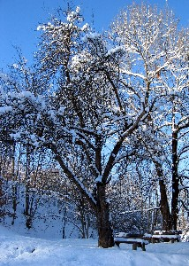 Kamerbeek,Ingrid-Snow 5